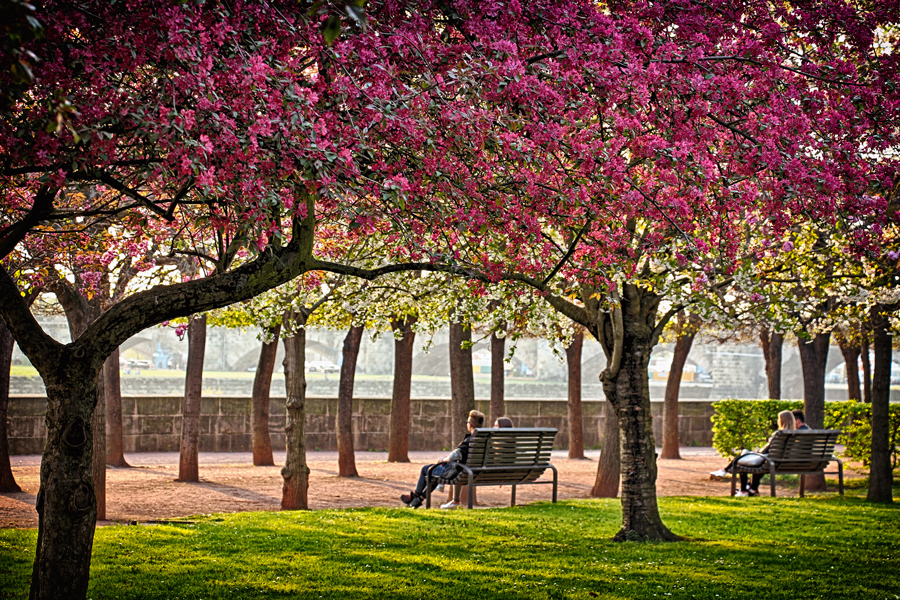 Kurze Pause zu zweit. Ausruhen unter den Blütenbäumen am Neustädter Elbufer im Frühling