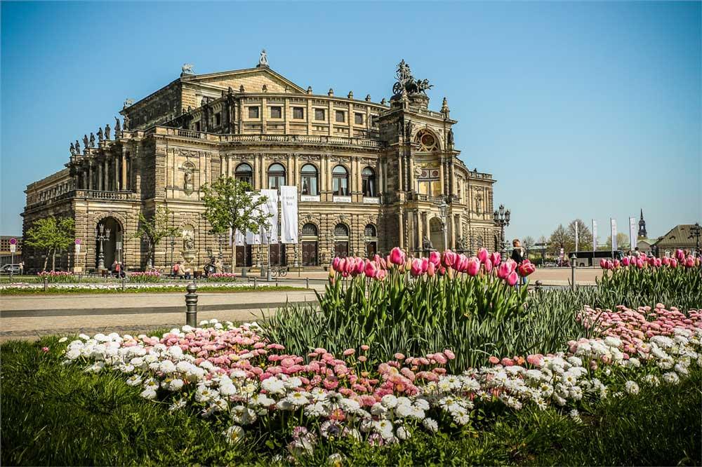 Tulpen auf den Grünflächen am Theaterplatz vor der Dresdner Semperoper